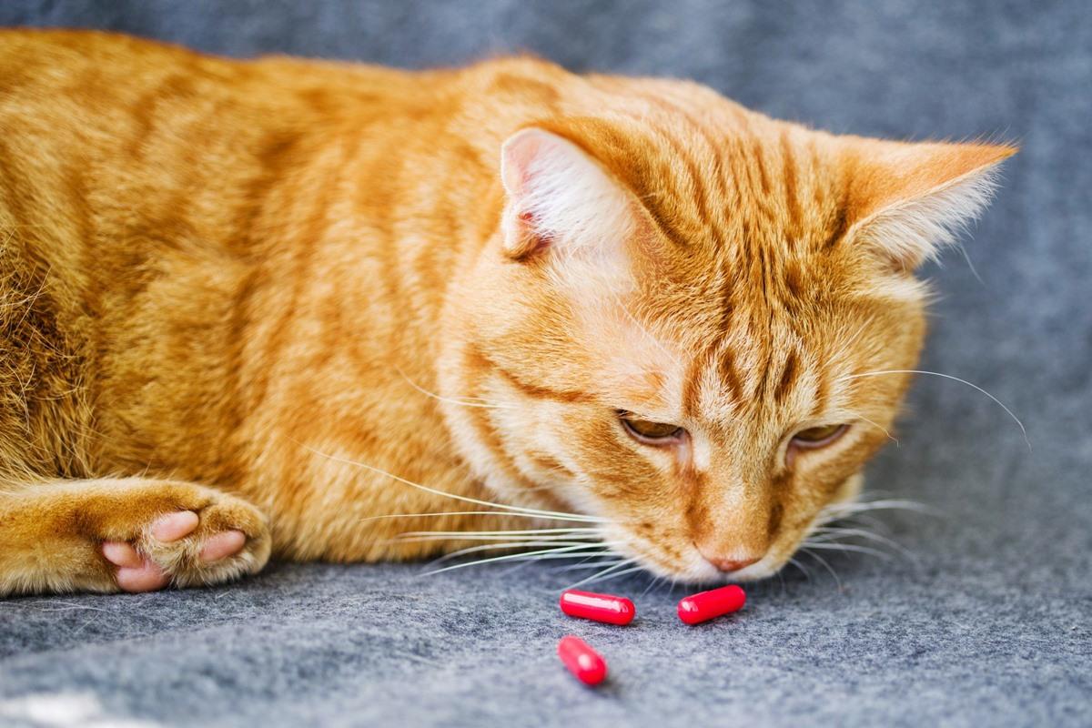 dare le pillole al gatto