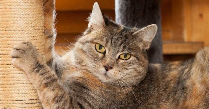 gatto usa tiragraffi