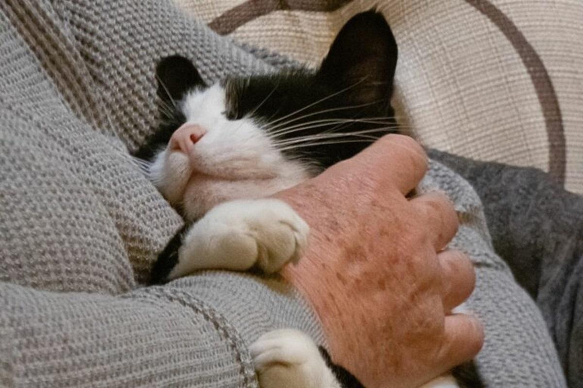 gatto accudito