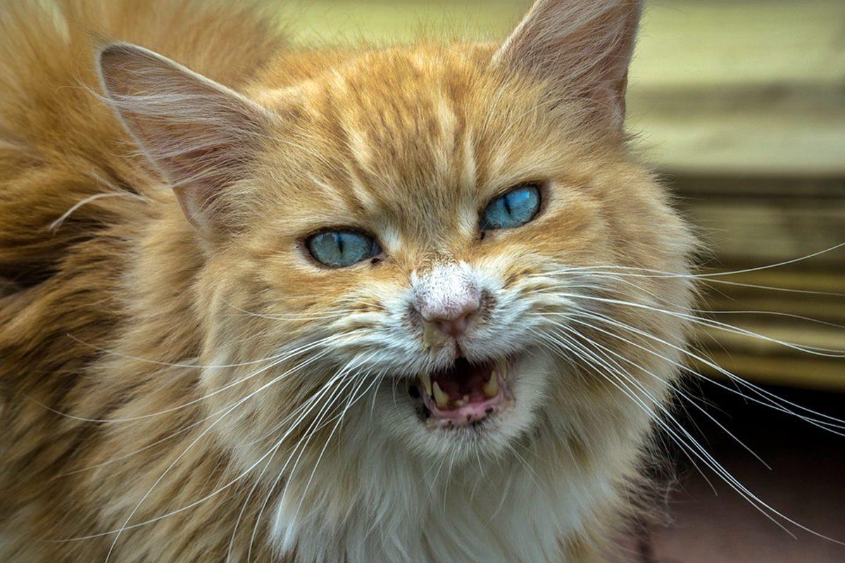 gatto randagio aggressivo con le persone