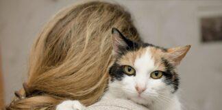 gatto consola padrona