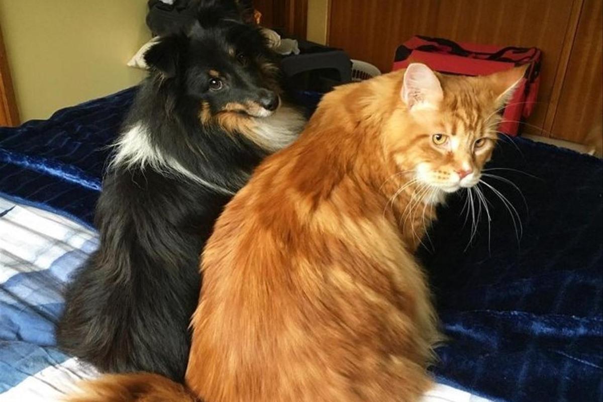 gatto omar con il suo amico cane