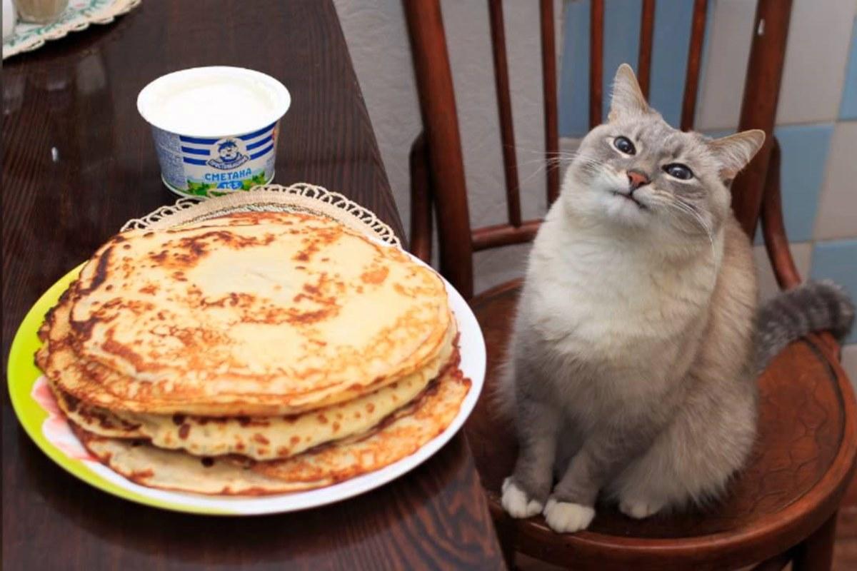 gatto e pancake