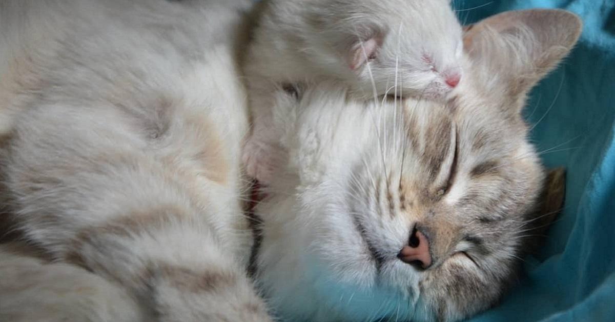 mamma e cucciolo di gatto
