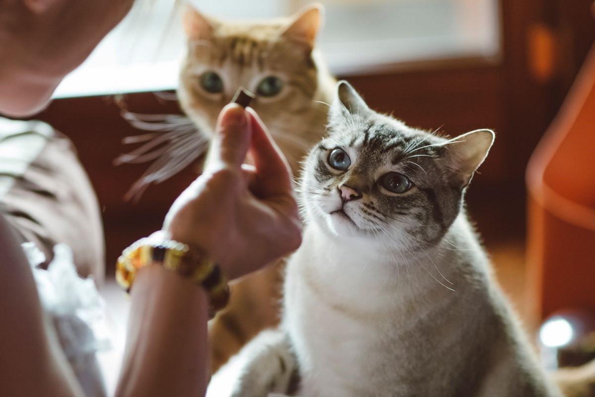 gattini che mangiano snack