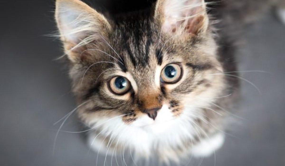 gattino con gli occhi dolci