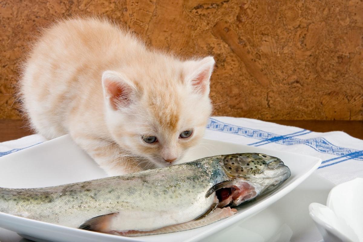 gattino annusa un pesce