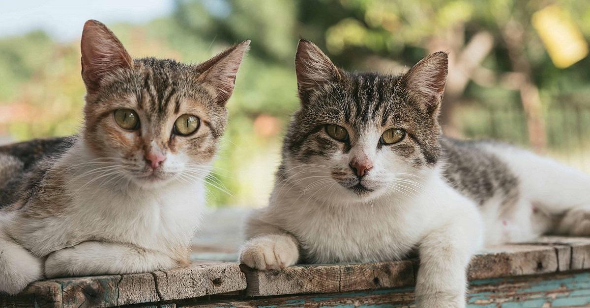 gatti all'aperto
