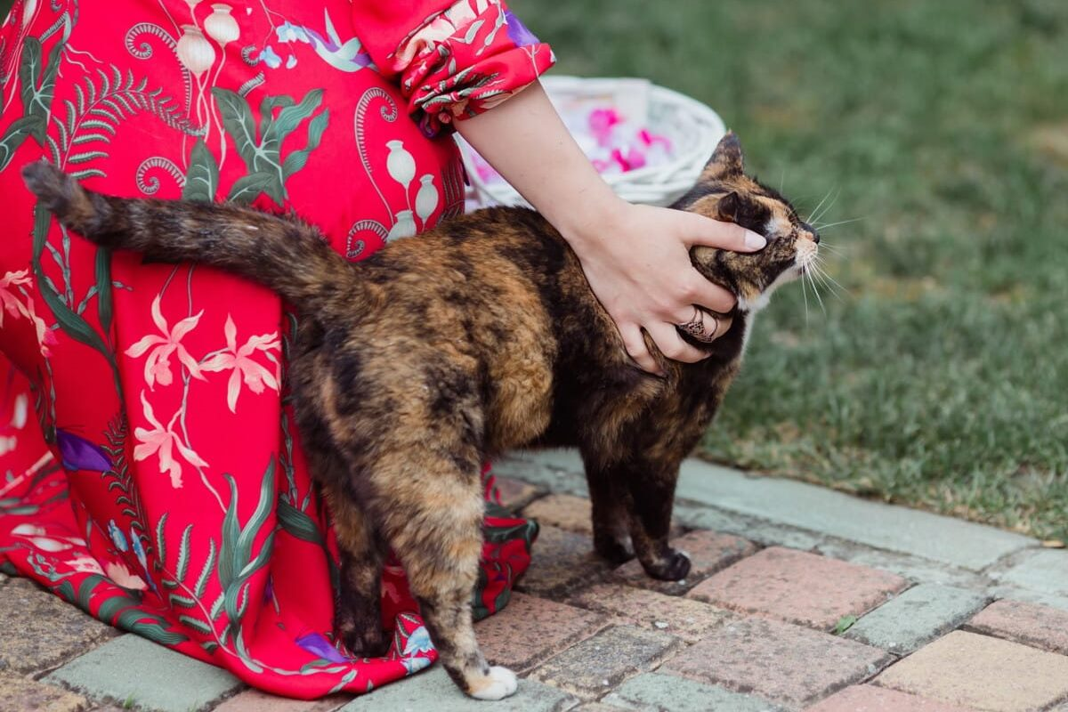 gatto che fa le fusa a una ragazza