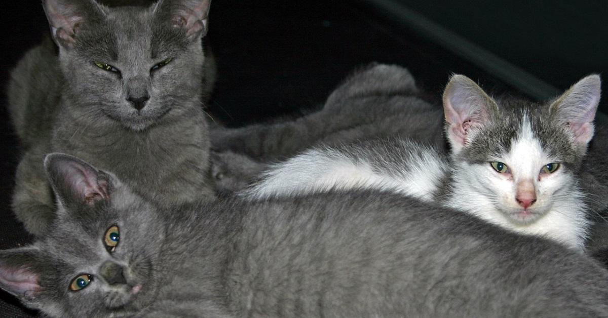 gattini orfani trovano una dolce mamma adottiva
