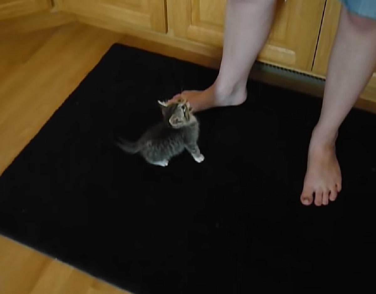 pepper gattina problemi salute piccola