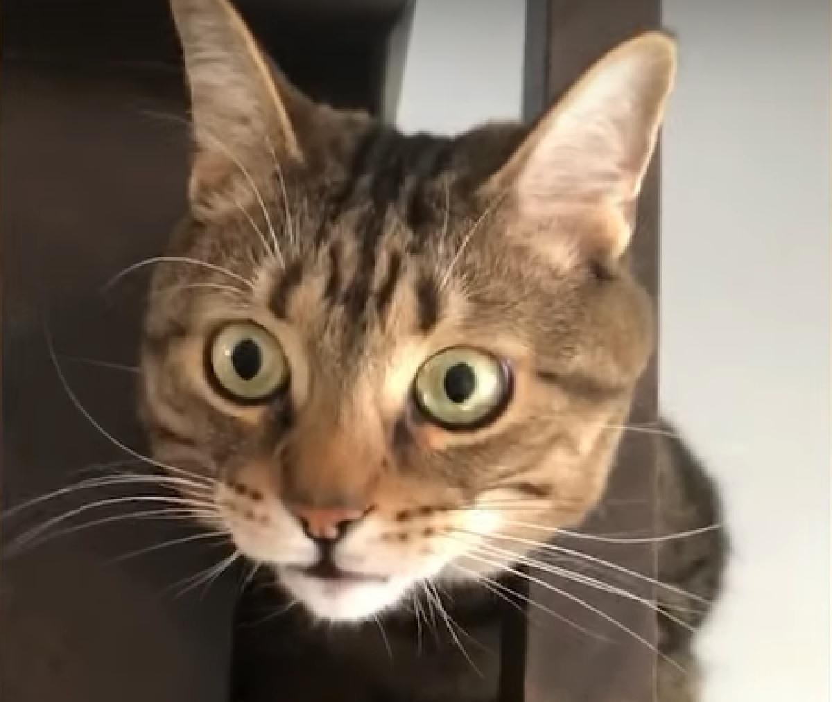 midou gattino problema con testa