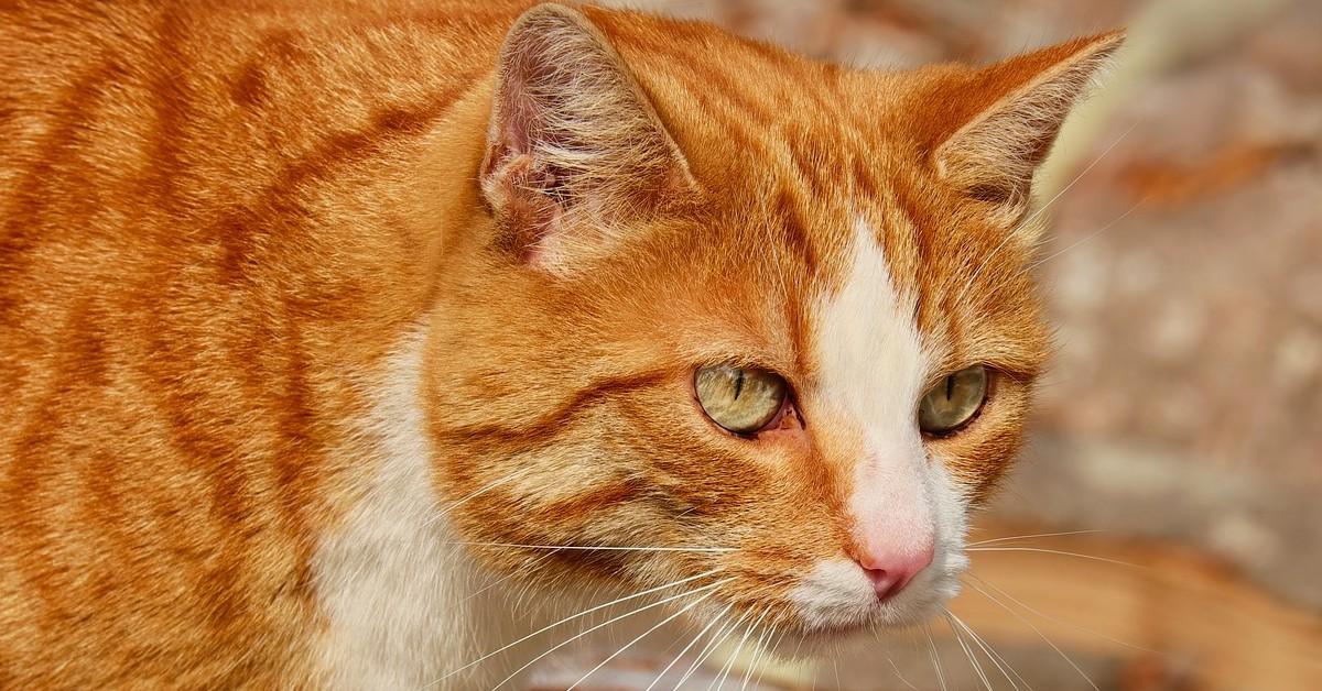 gattino che giudica i vicini dalla finestra
