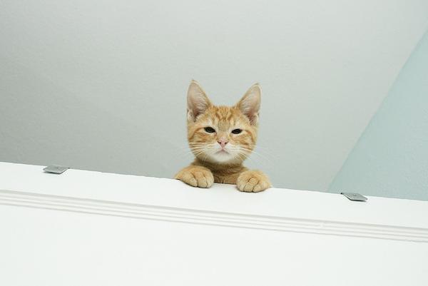 gattino diffidente