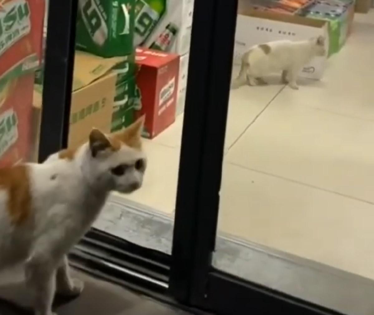 gattino maestro mette in pratica piano