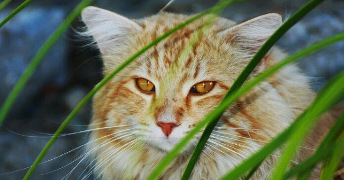 gattino europeo ruba cibo negozio strabiliante astuzia video