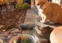 gattino gioca con un filo di erba