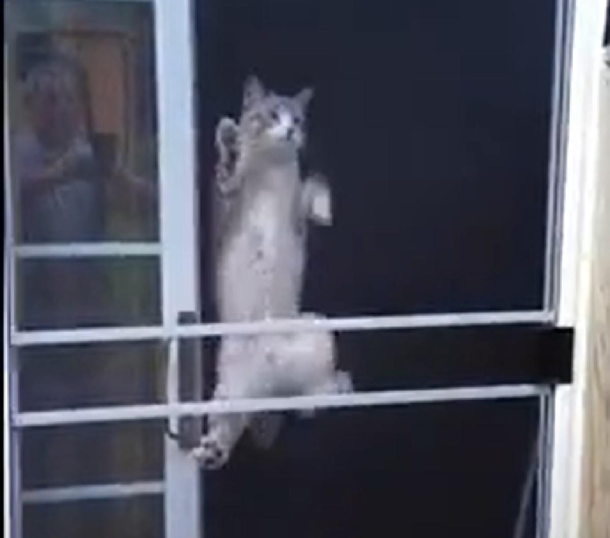 gattino ninja inizio scalata