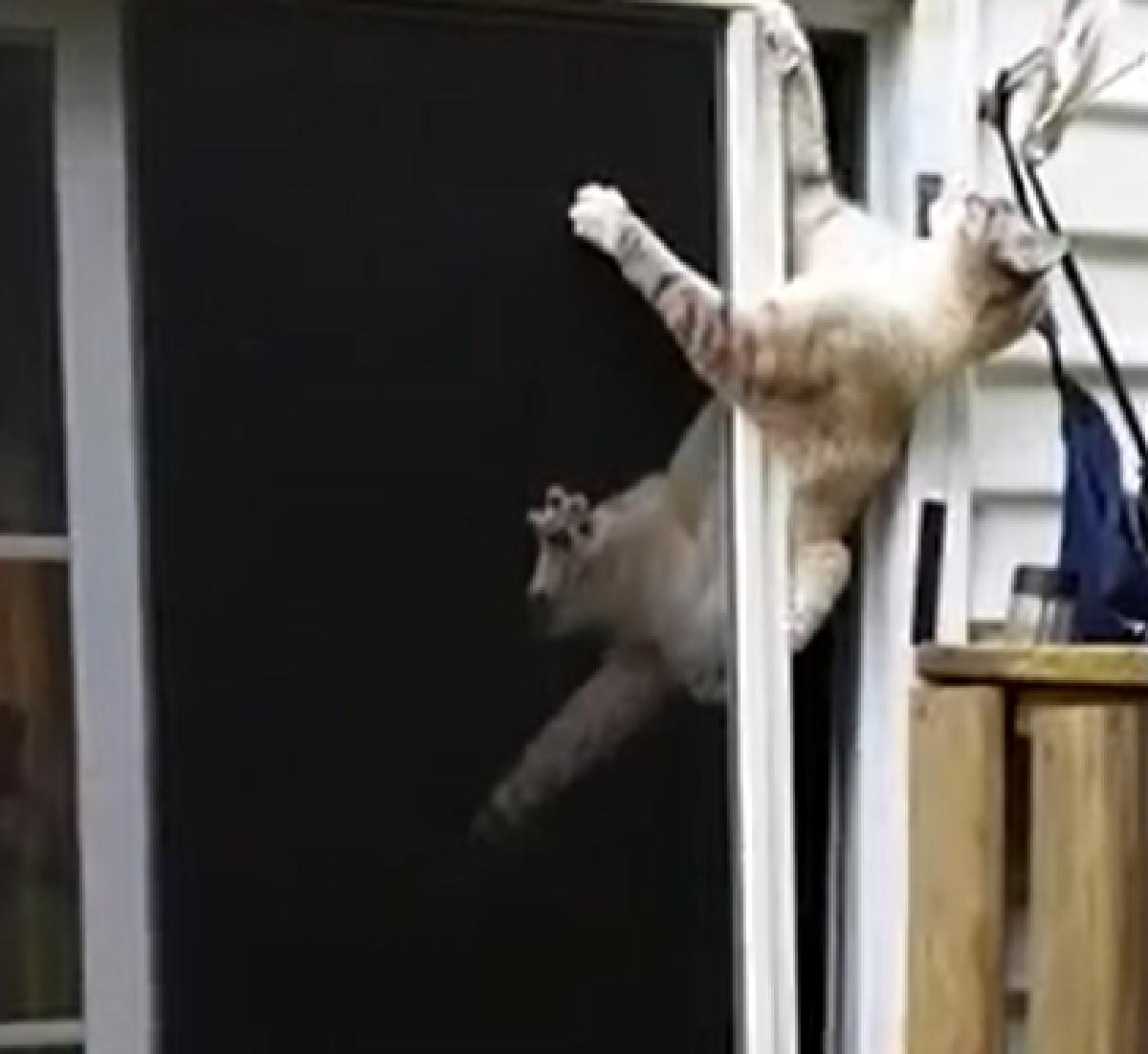 gattino ninja spettatori esterni