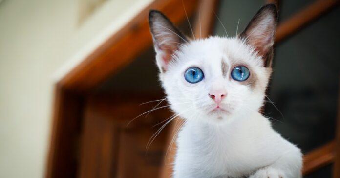 gattino riesce oltrepassare zanzariera maestria video