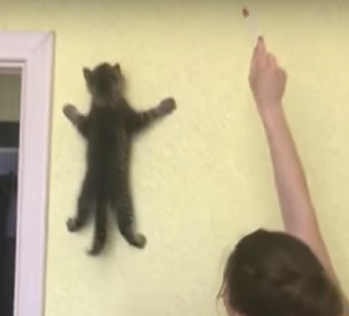 gattino soriano paura di cadere
