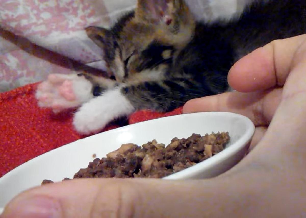 mark gattino soriano buon gusto