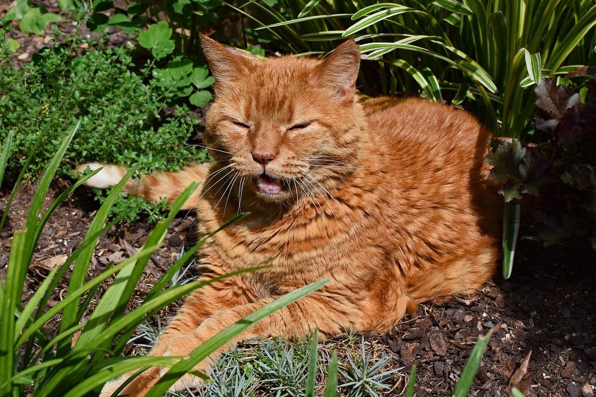 gatto arancione randagio