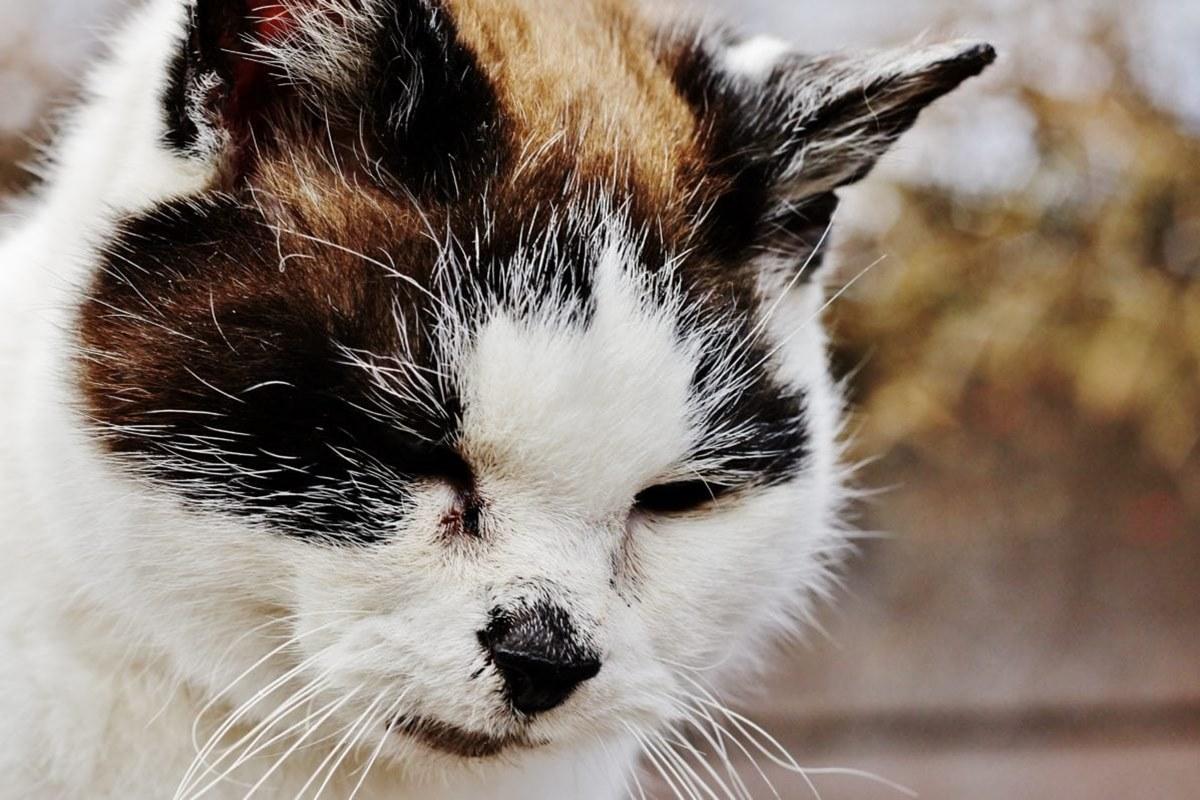 gatto molto vecchio