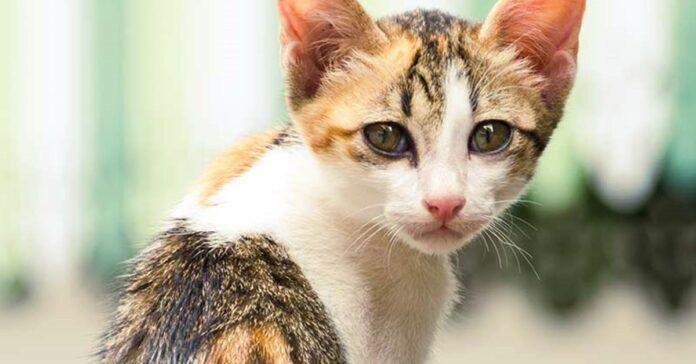 gattino molto magro