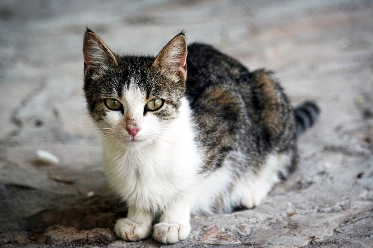 gatto randagio magro