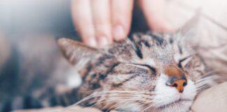 gatto che va rassicurato