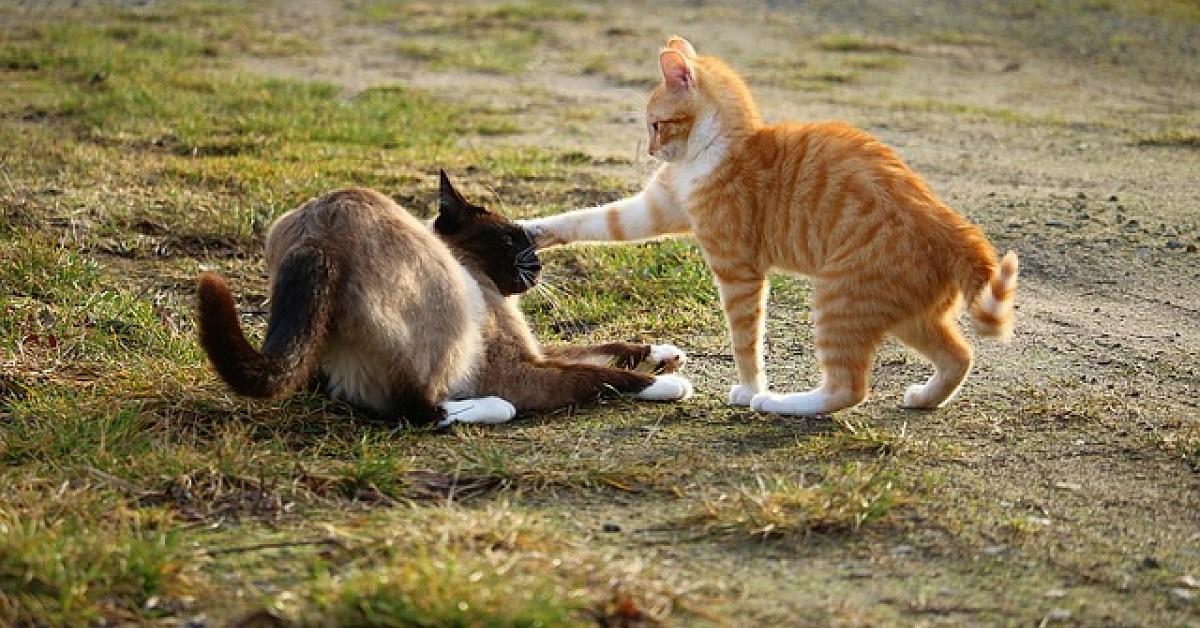 gatto che respinge gatto