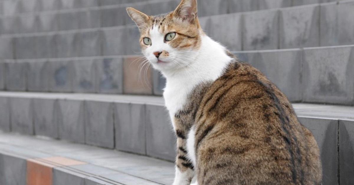 gatto aspetta sulle scale
