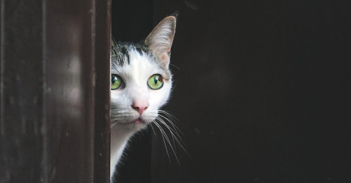 gatto dietro alla finestra