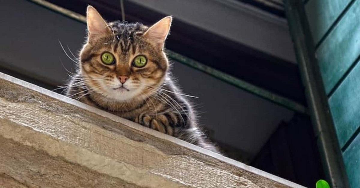 gatto si affaccia alla finestra