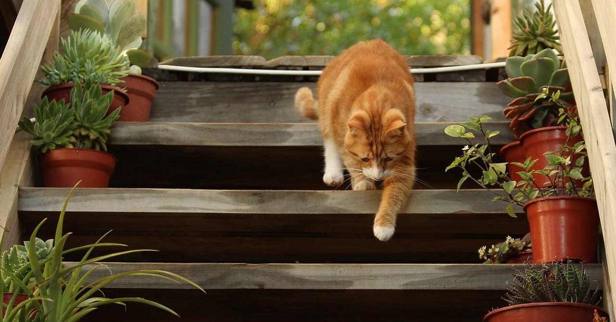gatto rosso scende scale