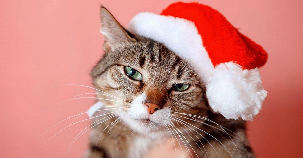 gatto con cappello di babbo natale