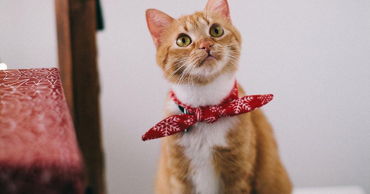 gatto con bandana al collo
