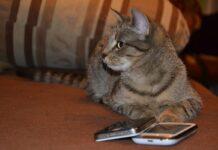 gatto accanto al cellulare