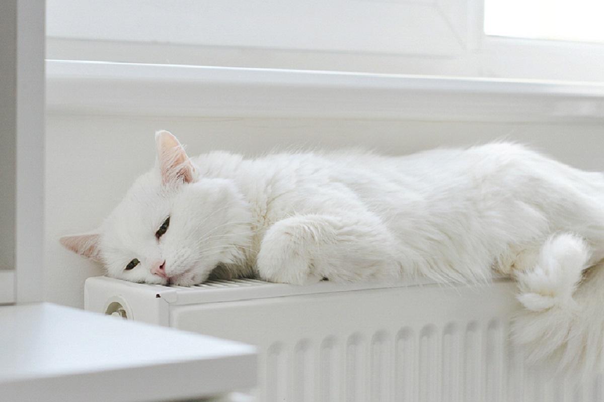 gatto sul termosifone