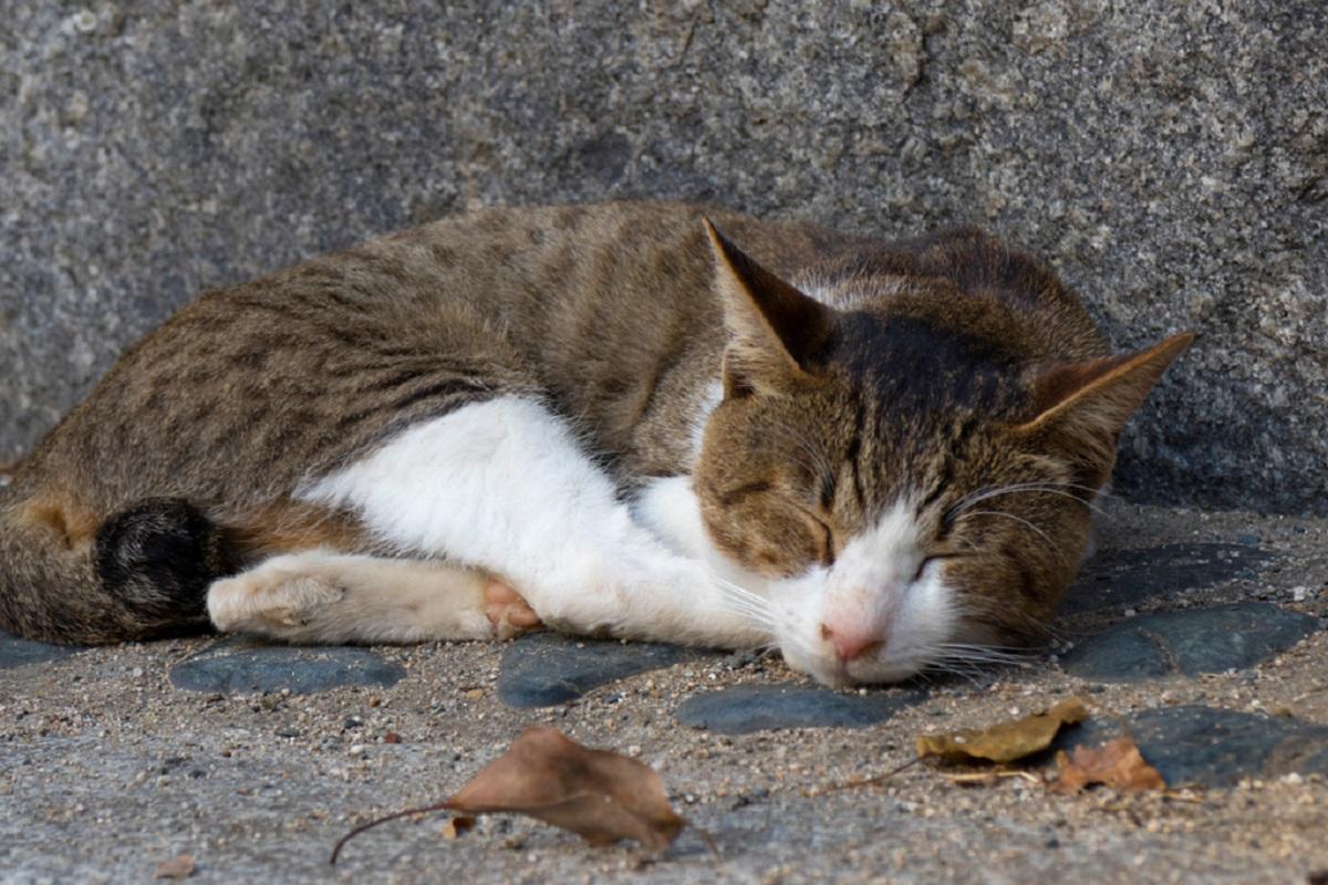 gattino randagio in autunno
