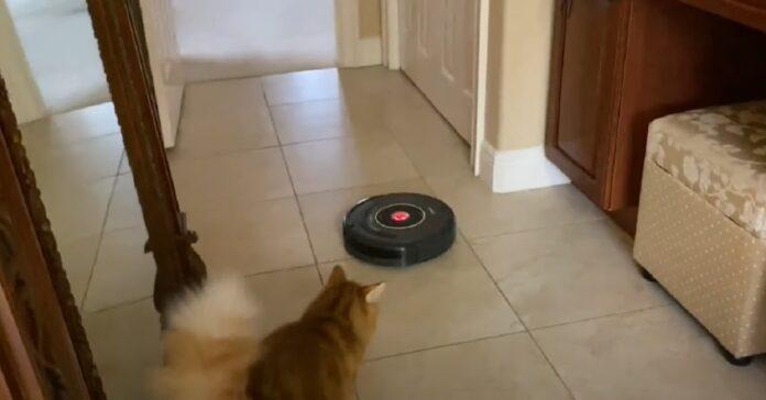 gatto robot guarda