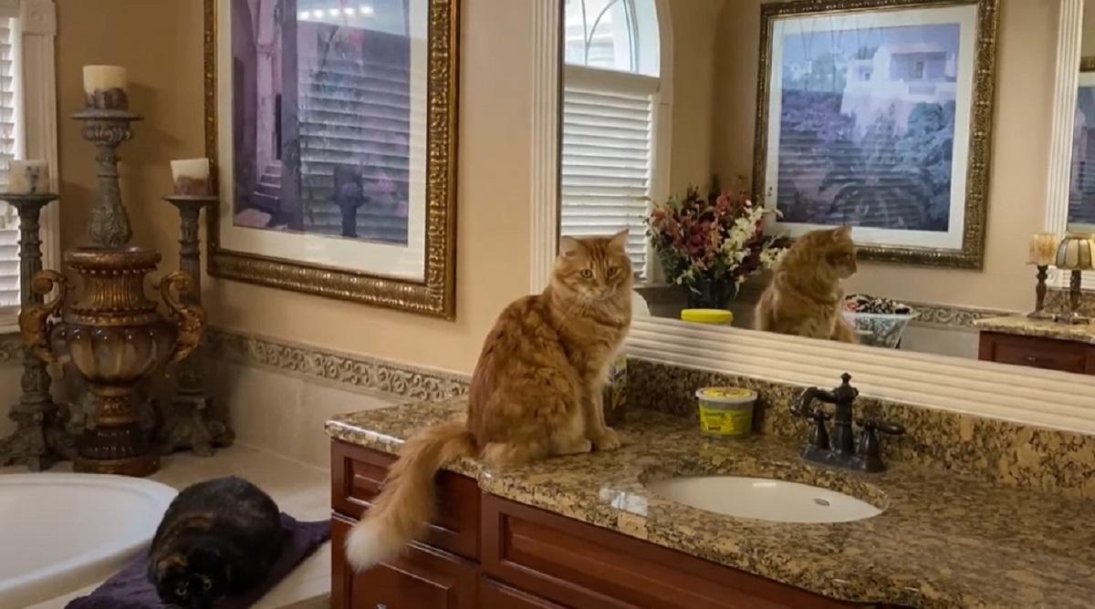 mici gatti aspirapolvere