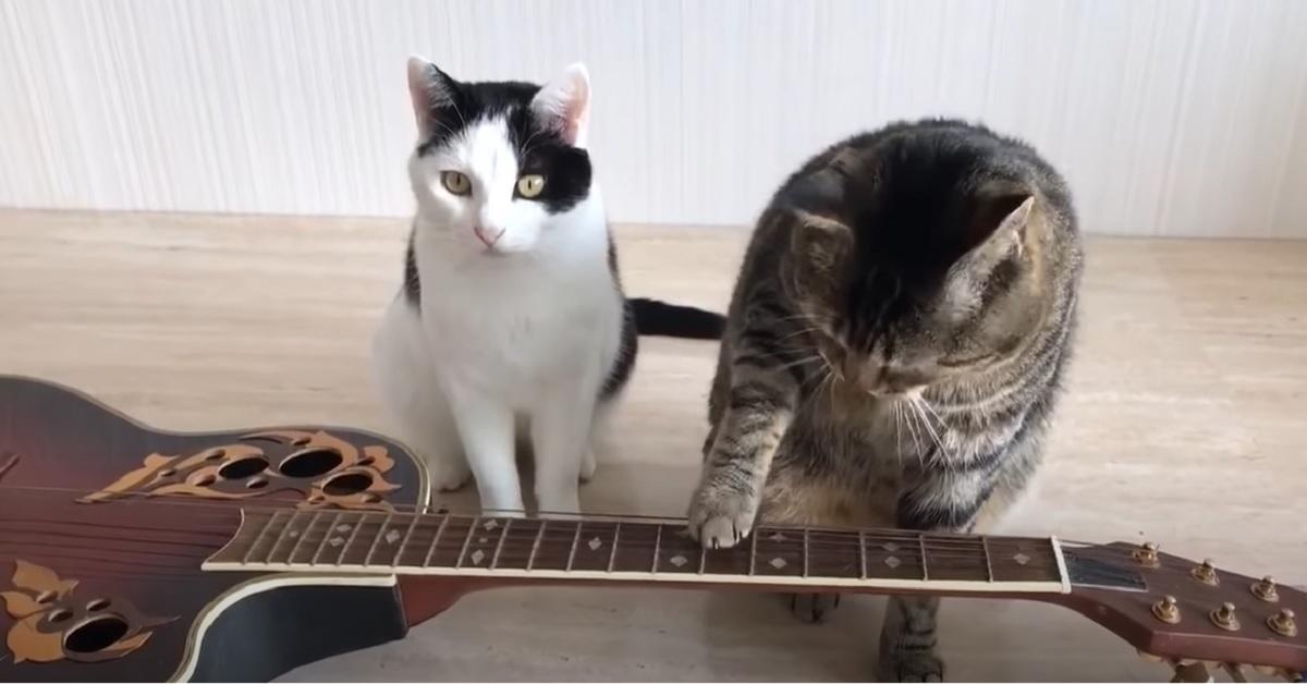 mici suonare musica