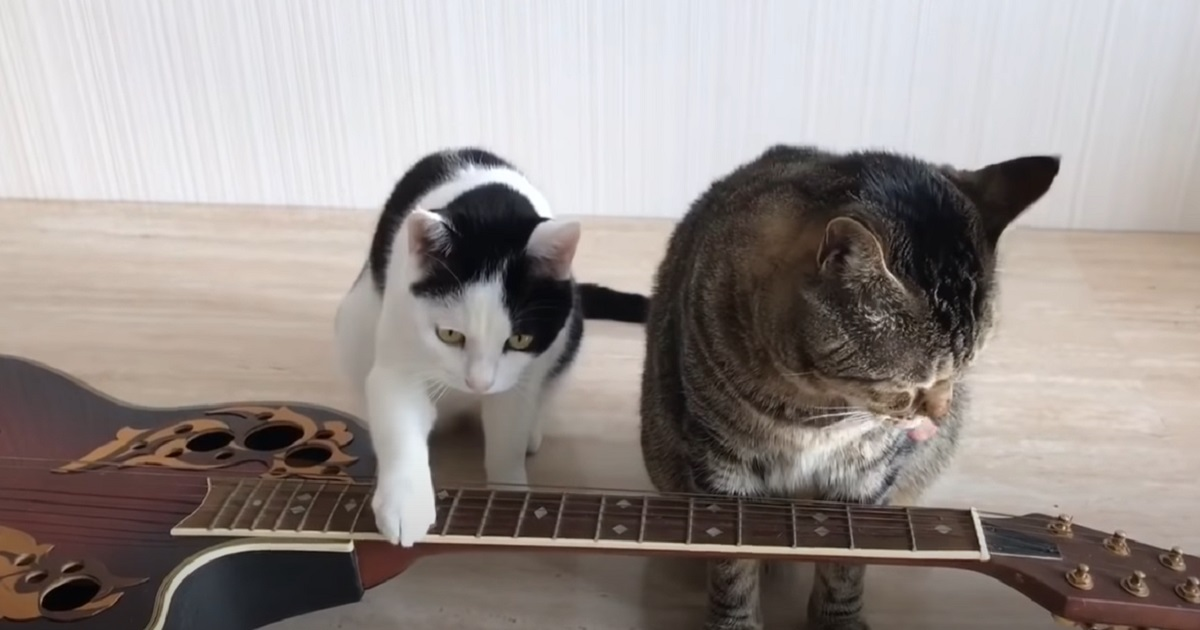 musicisti felini amici