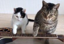 gattini chitarra suono
