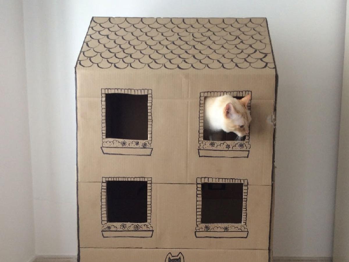 gattini proprietario inizia esperimento