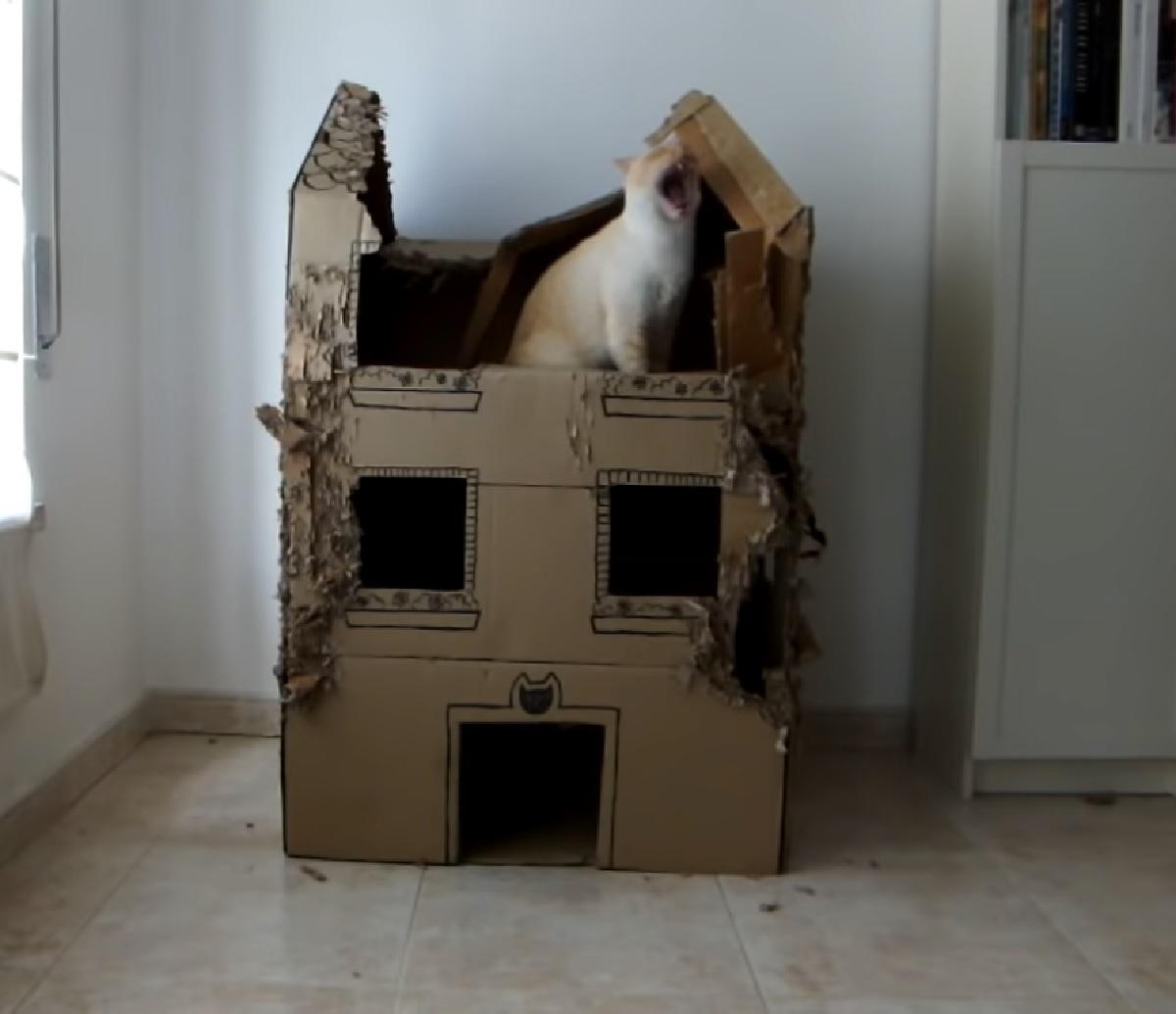 gattini casa rovinata esperimento