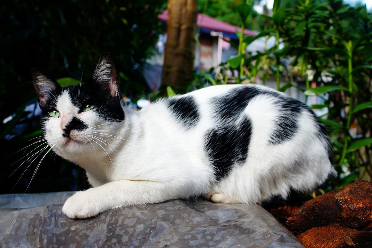 gatto in procinto di cacciare