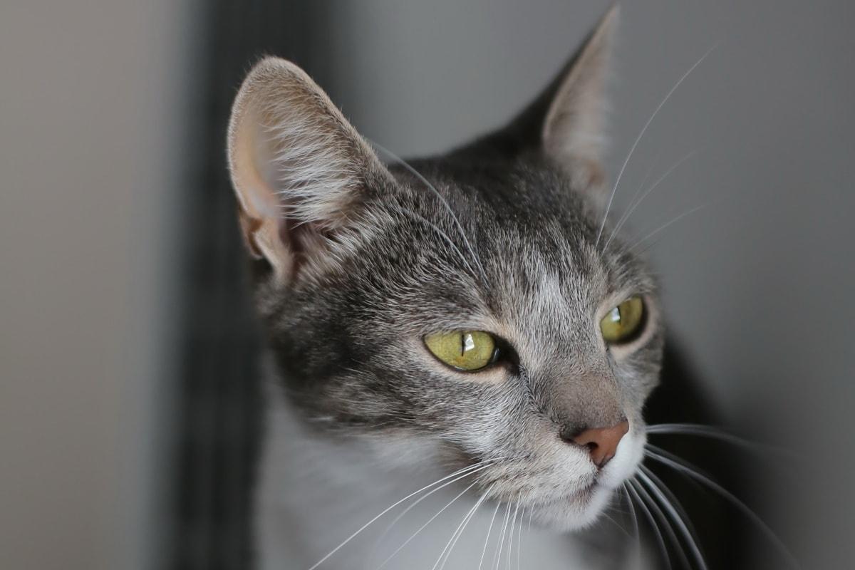 gatto che guarda il vuoto
